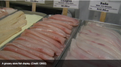 NYC CBS Local Footage of a Fish Counter